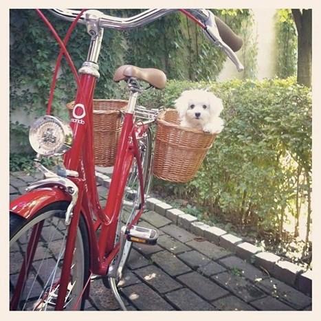 Bicikli Koje Ćete Obožavati! - Fashion.Hr Style Community