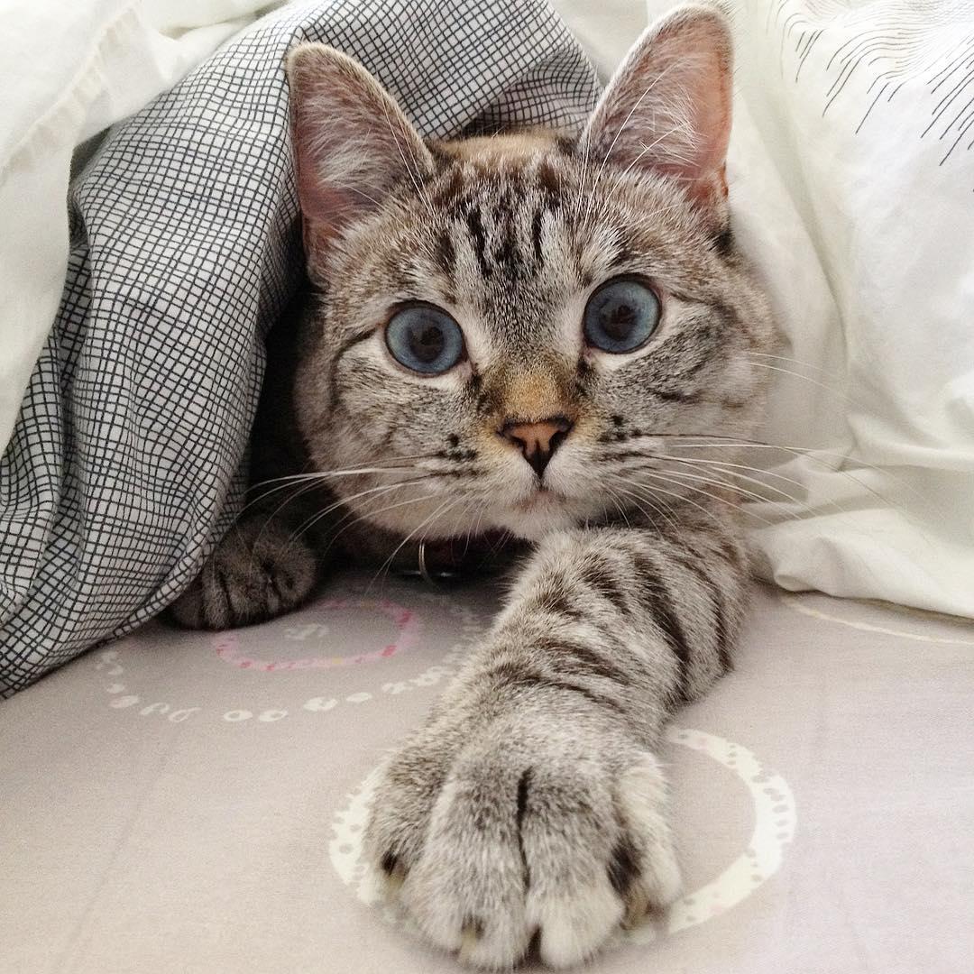 кошка нала фото вас должно