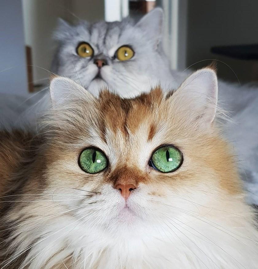 Volim mačke s profilima web mjesto za upoznavanje velikih nogu