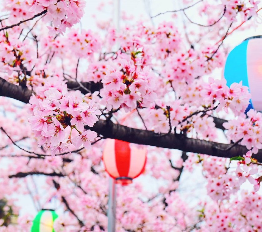 tradicionalno druženje u Japanu
