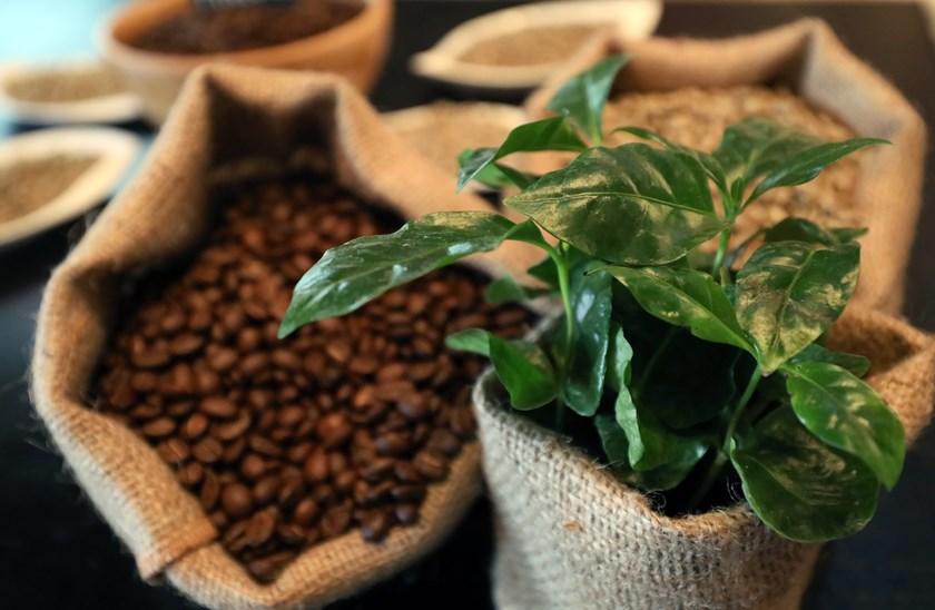 Ako ste i vi ljubitelj kave, slobodno nam se javite i osigurajte svoje mjesto na ovom.